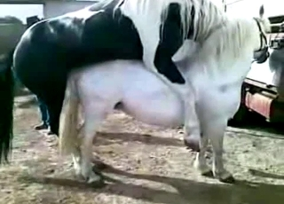 Two nice stallions are enjoying bestiality