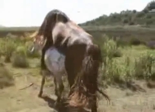 Brown and white ponies having sex