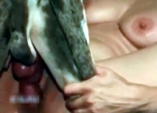 Close-up gape with a massive dog cock